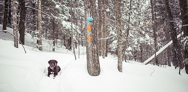 Dog Lover's Guide to Maine Slopes. Photo: Craig Angevine, Yeah Bud! Photography.
