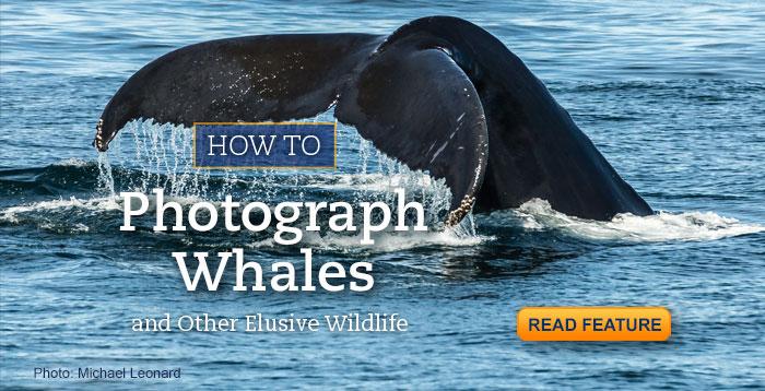 photograph-whales.michael-leonard