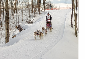 Dogsledding at Five Fields Farm