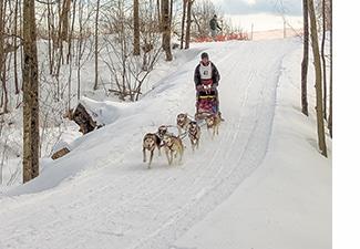 Dogsledding at Five Fields Farm