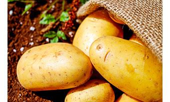 Maine potatoes.