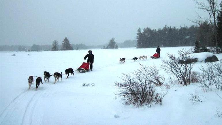 Maine Dogsledding Adventures